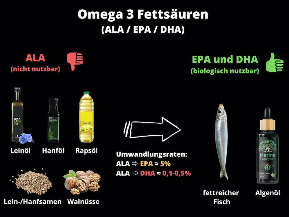 Omega 3 Fettsäuren in welchen Nahrungsmitteln